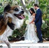 If These Pictures of Dogs Photobombing Wedding Photos Don't Brighten Your Day, Nothing Will