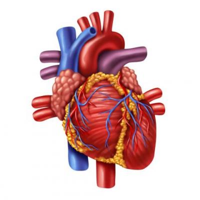 Does Exercise Increase the Risk of Atrial Fibrillation?