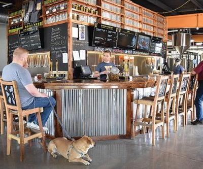 5 Dog-Friendly Breweries to Check Out This Summer