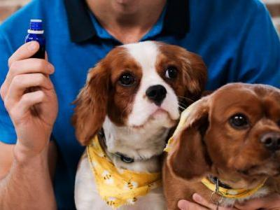 Essential Oils for Pets: The Best & Worst Oils to Help Your Furry Friends