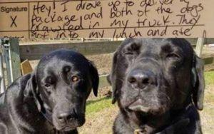 "Dog Brothers ""Shamed"" For Stealing Mail Carrier's Lunch Send Adorable Apology"