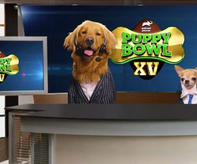 The Puppy Bowl 2019 Live Stream: How To Watch the 2019 Puppy Bowl Online