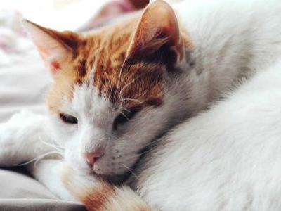 17-year-old boy charged with shooting, killing cat with arrow
