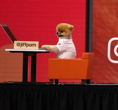 A famous dog stole the show at Facebook's F8 developer conference - here's everything you need to know about Instagram star Jiff Pom, who has 26 million fans