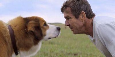 A Dog's Purpose Cancelled Its Hollywood Premiere, Still Says German Shepherd Wasn't Harmed