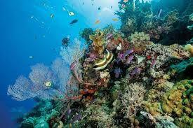 Domestic tourism to Great Barrier Reef falls for marine pollution