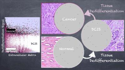 Stem Cell Plasticity and Niche Dynamics in Cancer Progression
