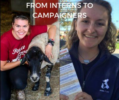 What happens to Animal Place's interns? Where do they go? What