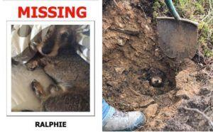 Dog Missing For 5 Days Is Found In Underground Rabbit Run