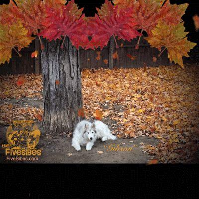 Fallen Leaves on a FiveSibes Flashback Friday
