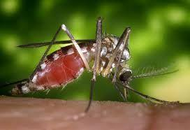 New Low-Input Protocol Enables High-Quality Genome Created from Single Mosquito