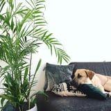 Decorate Your Home With These Cute and Safe Houseplants For Dogs