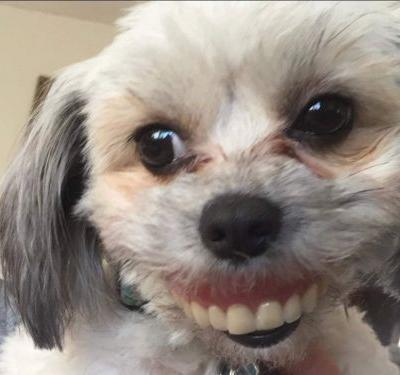 This dog stole a human pair of dentures - and the photos are the best thing you'll see all day