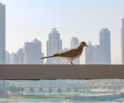 How to Choose Glass that Prevents Birds from Colliding with Buildings