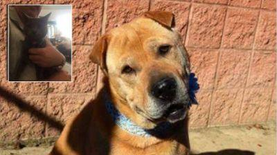 A Shelter Dog Who Beat Cancer & Helped Rescue A Cat Is Still Waiting To Be Adopted