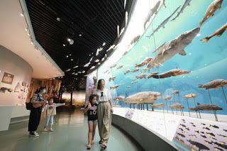 Museums could play educational role for schools, guidance says