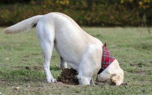 6 Reasons Dogs Bury Their Food, Treats & Toys