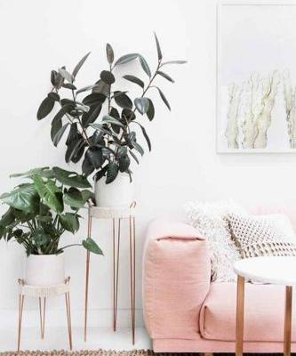 Cold Weather Is Here-It's Time to Reassess Your Plant Mom Strategy