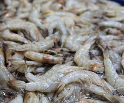 Scientists stumped as to why shrimp is testing positive for cocaine