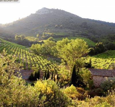 Languedoc Day: Four Unique Wines from the Languedoc Region