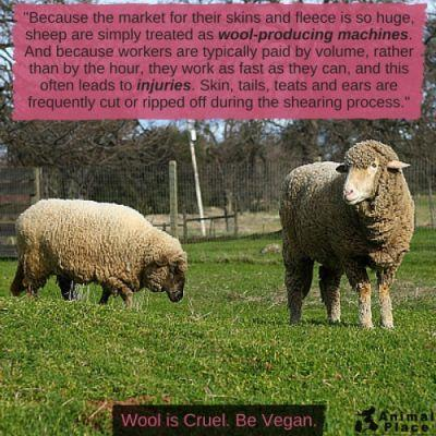 Wool is cruel! Read more here and buy man-made materials