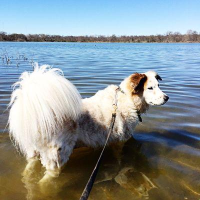 Fido + Fluffy's Freebie Friday Heads to the Lake!
