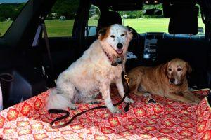Our molly mutt Car Seat Cover Heads to the Lake!