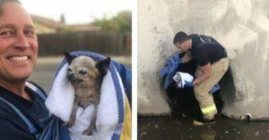 Fire Department Rescues Tiny Chihuahua Trapped in a Deep Canal