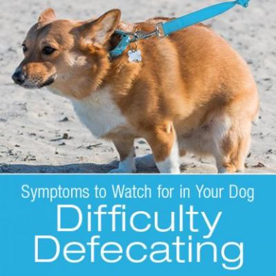 Symptoms to Watch for in Your Dog: Straining to Poop/Difficulty Defecating