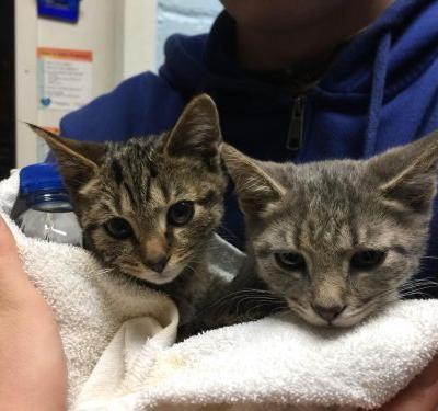 'They were not moving': Cats, kittens found freezing in snow along rural road
