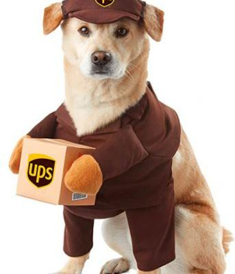 Halloween Costumes For Cats And Dogs That Will Make You Crack Up