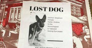 Restaurant Helps By Putting Lost Pets On Pizza Boxes!