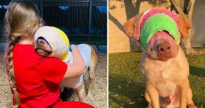 Sweetest Dog Who Was Set On Fire To Receive Hero Animal Award