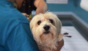 New State Law Would Allow Pet Owners To Write Off Thousands Of Dollars Worth Of Vet Bills