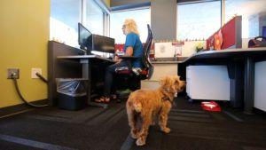 Best. Benefit. Ever. These Employees Bring Their Pups to Work