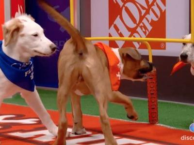 Don't Worry, There Will Still Be A 2021 Puppy Bowl!