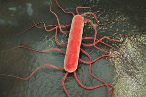 South Africa Listeria Outbreak now a Staggering 164 Dead