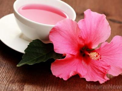 Hibiscus tea improves blood flow, reduces risk of cardiovascular disease
