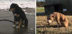 """Celebrities Give A Voice To The Forgotten """"Outdoor Dogs"""" In This Heartbreaking Video"""