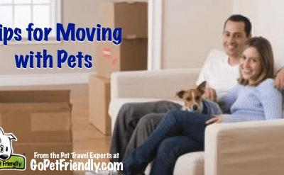 Tips for Moving With Your Pets