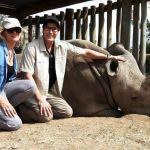 Hybrid White Rhino Embryos: Genetic Rescue, Part 2