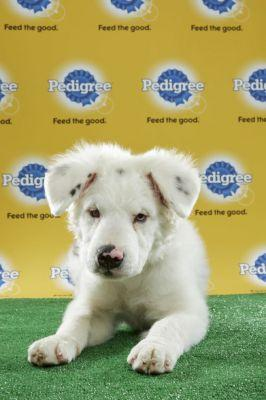 Meet The Star Players of 2017's Puppy Bowl