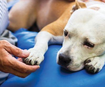 Addison's Disease in Dogs - Why It's So Hard to Identify