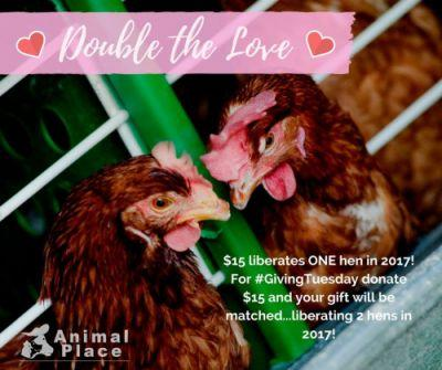 It's GivingTuesday - your gift today liberates a hen in
