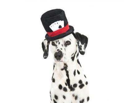 4 Magic Tricks To Teach Your Dog And WOW Your Audience-Viola!