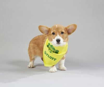 The 2019 Puppy Bowl Lineup Is Here To Show Off The Cutest Competitors In the Game