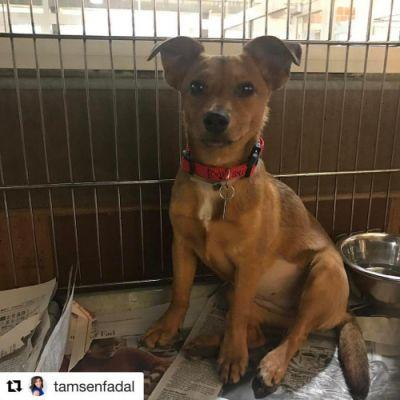 Blessing is a 7 month old Chihuahua mix who is looking for her