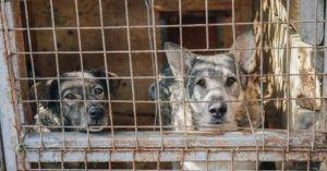 Statewide Registry Would Ban Animal Abusers From Owning A Pet For 7 - 10 Years