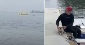 Heroes Work Together To Save Terrified Dog Stranded On Buoy