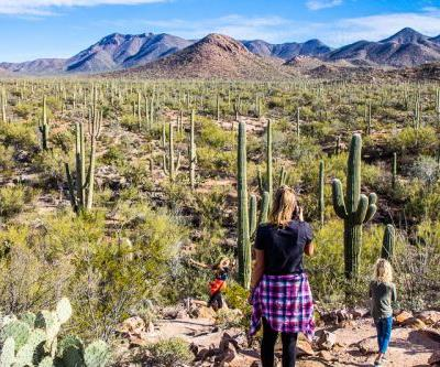 8 Amazing Things to Do in Saguaro National Park Tucson, Arizona